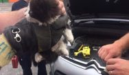 In a whisker of time: Limerick city firefighters praised after they rescued a distressed kitten from the engine bay of a car