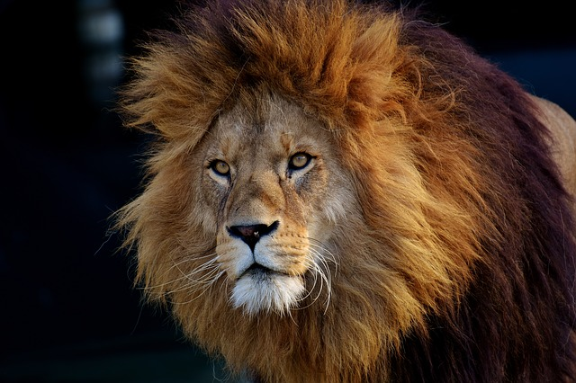 Family IDs severed head of suspected poacher eaten by lions