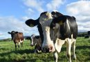 Irish Farmers Association call for government for assistance as a nationwide fodder shortage is expected