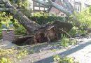 Girl, 9, injured after a tree fell on top of her during Storm Deirdre